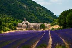 Lavendel-Feld in Senanque-Abtei in Provence, Frankreich Lizenzfreie Stockfotografie