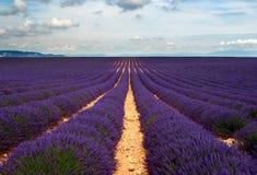 Lavendel-Felder Stockfotografie