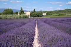 Lavendel-Felder Lizenzfreie Stockfotografie