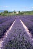 Lavendel-Felder Stockbilder