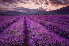 Lavendel-Felder Ausgezeichnetes Bild des Lavendelfeldes Sommersonnenunterganglandschaft, kontrastierende Farben Dunkle Wolken, dr lizenzfreies stockfoto