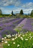 Lavendel-Felder für immer stockbilder