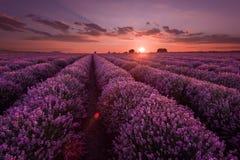 Lavendel-Felder Schönes Bild des Lavendelfeldes Sommersonnenunterganglandschaft, kontrastierende Farben Dunkle Wolken, drastische Lizenzfreie Stockfotos