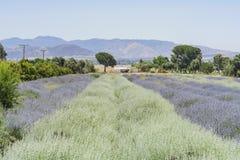 Lavendel-Festival bei Bauernhof 123 Lizenzfreie Stockbilder