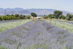 Lavendel-Festival bei Bauernhof 123 Lizenzfreie Stockfotografie