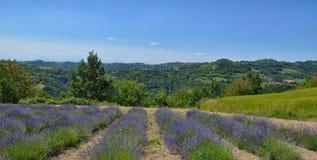 Lavendel Field-3 stockbilder