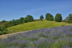 Lavendel Field-4 lizenzfreies stockfoto