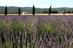 Lavendel flowers france Stock Photography
