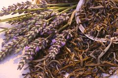 Lavendel: frisch u. Tee Lizenzfreies Stockbild