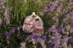 Lavendel hält auf einem Gebiet mit Babyschuhen auf Stockfoto