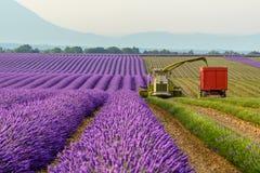 Lavendel het oogsten, de Provence Stock Foto's