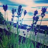Lavendel himmelmoln Arkivfoton