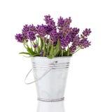 Lavendel i en metallhink Arkivfoton