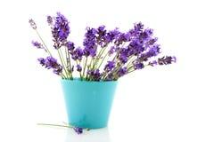 Lavendel im blauen Blumenpotentiometer Lizenzfreies Stockbild