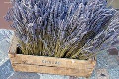 Lavendel im Fach Stockfoto