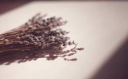 Lavendel im warmen Licht, das auf die weiße Tabelle legt lizenzfreie stockbilder