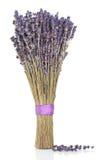 Lavendel-Kraut-Blumen lizenzfreie stockfotos