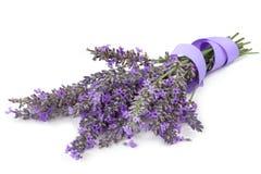 Lavendel mit Band über Weiß Stockfoto
