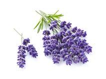 Lavendel mit Blättern Lizenzfreies Stockbild