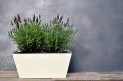 Lavendel mit Blumen stockfotografie