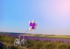Lavendel mit heiratendem weißem Fahrrad lizenzfreie stockfotos