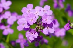 Lavendel-Neigung Lizenzfreie Stockbilder