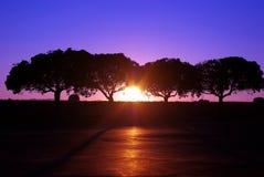 Lavendel och blåttsolnedgång till och med träden Royaltyfri Foto