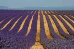 Lavendel- och lavandinfält i Provance Royaltyfri Bild