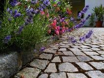 Lavendel och rosor Arkivbilder