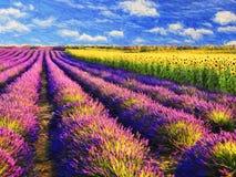 Lavendel och solrosfält Arkivfoton