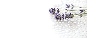 Lavendel på en delikat vit platta Fotografering för Bildbyråer