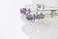 Lavendel på en delikat vit platta Arkivbilder