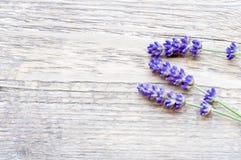 Lavendel på trä Royaltyfria Foton