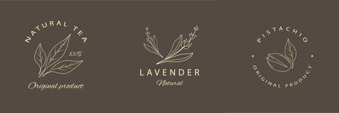 Lavendel, pistache, natuurlijk theeetiketten of embleem Lijn logotype Vector vector illustratie