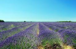 Lavendel in Povence Royalty-vrije Stock Foto