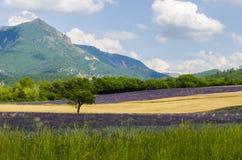 Lavendel, Provence, Frankreich Stockbild