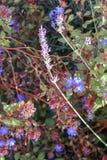 Lavendel in rood royalty-vrije stock foto