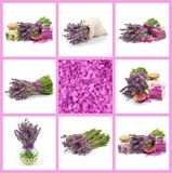 Lavendel, Satz Stockfotos