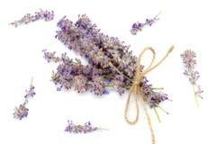 Lavendel som isoleras på en vit bakgrund close upp Royaltyfria Bilder