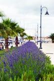 Lavendel in Stari Grad op Hvar-eiland, Kroatië stock foto