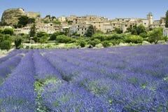 Lavendel stellt hilltown Provence Frankreich auf Stockbilder