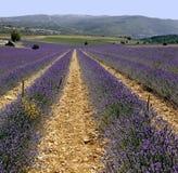 Lavendel stellt Provence Frankreich auf Lizenzfreie Stockfotos