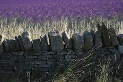 Lavendel stellt snowshill Lavendelbauernhof die cotswolds Gloucester auf Stockfoto
