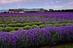 Lavendel-Tal Stockbild