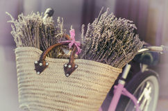 Lavendel Tuscany, Frankrike Royaltyfria Foton