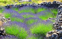 Lavendel und Bruchstein Lizenzfreie Stockbilder