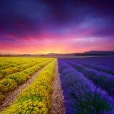 Lavendel und ewig Feld in Provence Stockfotos