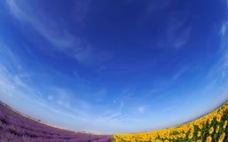 Lavendel und Sonnenblume fileds unter blauem Himmel lizenzfreies stockbild