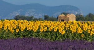 Lavendel- und Sonnenblumeeinstellung in Provence, Frankreich Stockfotografie