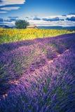 Lavendel und Sonnenblumenfeld mit Baum in Frankreich Lizenzfreie Stockfotos